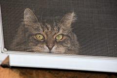 Η γάτα κοιτάζει έξω από πίσω από το προστατευτικό πλέγμα στο παράθυρο στοκ φωτογραφία με δικαίωμα ελεύθερης χρήσης