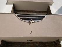 Η γάτα κοιτάζει κάτω από το μπαλκόνι Στοκ εικόνα με δικαίωμα ελεύθερης χρήσης