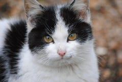 η γάτα κοιτάζει Στοκ φωτογραφία με δικαίωμα ελεύθερης χρήσης