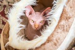 η γάτα κοιτάζει στοκ φωτογραφίες με δικαίωμα ελεύθερης χρήσης
