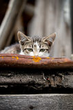 Η γάτα κρύβει Στοκ Εικόνα