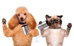 Η γάτα με ένα σκυλί στο τηλέφωνο με το α μπορεί στοκ φωτογραφίες