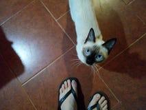 Η γάτα μου εξέτασε με στοκ εικόνα