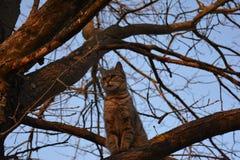 Η γάτα μου! Στοκ εικόνες με δικαίωμα ελεύθερης χρήσης