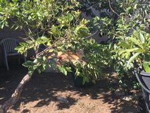 Η γάτα μου Garfield Στοκ εικόνες με δικαίωμα ελεύθερης χρήσης