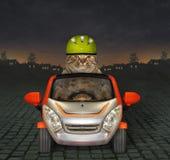 Η γάτα οδηγεί ένα ανοικτό αυτοκίνητο τη νύχτα στοκ εικόνα