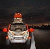 Η γάτα οδηγεί κάτω από την εθνική οδό τη νύχτα στοκ φωτογραφίες με δικαίωμα ελεύθερης χρήσης