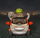 Η γάτα οδηγεί το φίλο του με το αυτοκίνητο τη νύχτα στοκ φωτογραφία με δικαίωμα ελεύθερης χρήσης