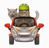 Η γάτα οδηγεί το φίλο του με το αυτοκίνητο στοκ εικόνα με δικαίωμα ελεύθερης χρήσης