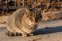 Η γάτα οδών είναι θερμαμένες στον ήλιο ακτίνες ` s Στοκ Εικόνες