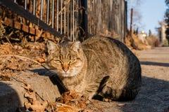 Η γάτα οδών είναι θερμαμένες στον ήλιο ακτίνες ` s Στοκ φωτογραφία με δικαίωμα ελεύθερης χρήσης
