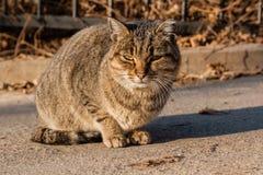 Η γάτα οδών είναι θερμαμένες στον ήλιο ακτίνες ` s Στοκ Εικόνα