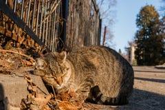 Η γάτα οδών είναι θερμαμένες στον ήλιο ακτίνες ` s Στοκ Φωτογραφίες