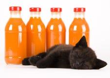 η γάτα πίνει το πορτοκάλι Στοκ Εικόνες
