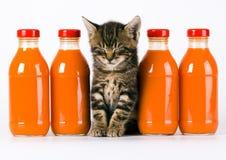 η γάτα πίνει το πορτοκάλι Στοκ Φωτογραφία