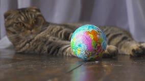 Η γάτα παίζει με μια σφαίρα Έννοια στον κόσμο στο χέρι σας κίνηση αργή φιλμ μικρού μήκους