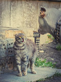 Η γάτα παρουσιάζει γλώσσα σκυλιών στοκ φωτογραφίες με δικαίωμα ελεύθερης χρήσης