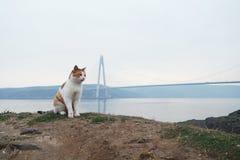 Η γάτα που ζει στην οδό ή τις τροφές με τη Βουλή στοκ εικόνες με δικαίωμα ελεύθερης χρήσης