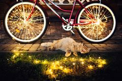 Η γάτα που στηρίζεται στο χορτοτάπητα με ένα ποδήλατο που περιβάλλεται από το φως, χαλαρώνει την εικόνα στοκ φωτογραφία με δικαίωμα ελεύθερης χρήσης