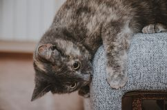 Η γάτα προετοιμάζεται να πηδήσει Στοκ εικόνες με δικαίωμα ελεύθερης χρήσης