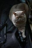 Η γάτα προετοιμάζεται Στοκ Φωτογραφίες