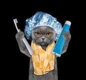 Η γάτα πρόκειται να καθαρίσει τα δόντια μετά από το ντους στοκ εικόνες