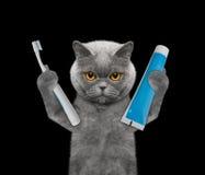 Η γάτα πρόκειται να καθαρίσει τα δόντια στοκ εικόνες