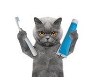 Η γάτα πρόκειται να καθαρίσει τα δόντια στοκ φωτογραφία με δικαίωμα ελεύθερης χρήσης