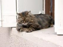 η γάτα ράβδων κρατά Στοκ Εικόνες