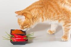 Η γάτα ρουθουνίζει το κόκκινο πιπέρι στοκ εικόνα