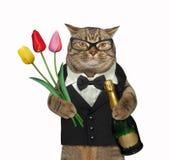 Η γάτα σε ένα κοστούμι κρατά το κρασί και τις τουλίπες στοκ φωτογραφία με δικαίωμα ελεύθερης χρήσης