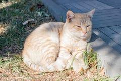 Η γάτα στηρίζεται κοντά στη συγκράτηση στην οδό Στοκ Φωτογραφίες