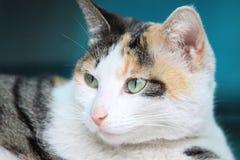 Η γάτα στη σκέψη στοκ εικόνες