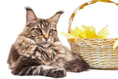Η γάτα στη χλόη Στοκ Εικόνες