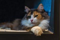 Η γάτα στη TV Στοκ εικόνα με δικαίωμα ελεύθερης χρήσης