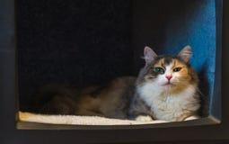 Η γάτα στη TV Στοκ Εικόνες