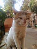 Η γάτα στις βαθιές σκέψεις Στοκ φωτογραφία με δικαίωμα ελεύθερης χρήσης
