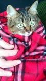 Η γάτα στο κάλυμμα Στοκ Φωτογραφίες