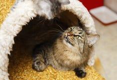Η γάτα στο σπίτι γατών Στοκ φωτογραφία με δικαίωμα ελεύθερης χρήσης