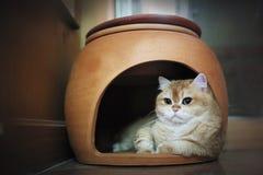 Η γάτα στο σπίτι Στοκ φωτογραφίες με δικαίωμα ελεύθερης χρήσης