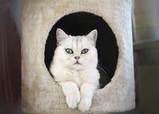 Η γάτα στο σπίτι Στοκ Εικόνες