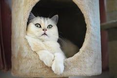Η γάτα στο σπίτι Στοκ φωτογραφία με δικαίωμα ελεύθερης χρήσης