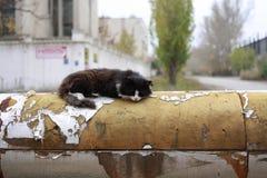 Η γάτα στο σωλήνα Στοκ εικόνα με δικαίωμα ελεύθερης χρήσης