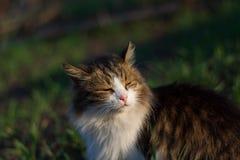 Η γάτα στραβίζει στον ήλιο στοκ φωτογραφίες