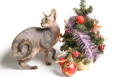 η γάτα συναντά το νέο έτος Στοκ Εικόνες