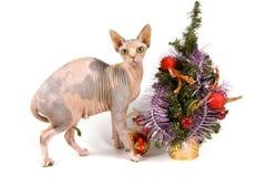 η γάτα συναντά το νέο έτος στοκ φωτογραφία