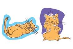 η γάτα τραυμάτισε οκνηρό Στοκ φωτογραφία με δικαίωμα ελεύθερης χρήσης