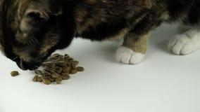 Η γάτα τρώει τα τρόφιμα φιλμ μικρού μήκους