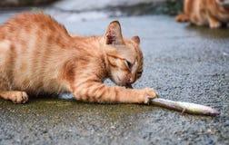 Η γάτα τρώει τα ψάρια Στοκ Εικόνα