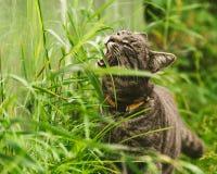 Η γάτα τρώει τη χλόη στο πάρκο στοκ εικόνες